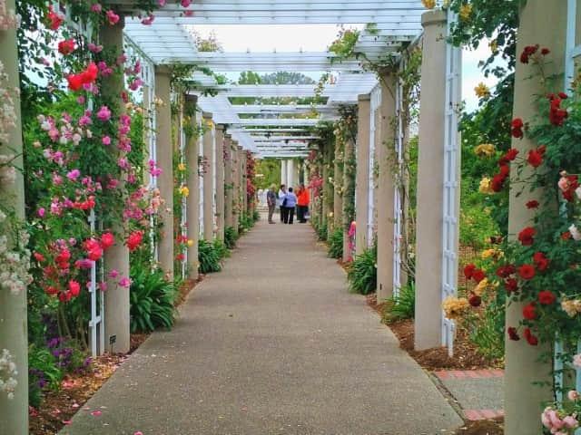 The Rose Garden at Huntington Gardens