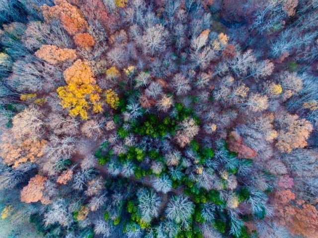 Nashville, Tennessee, USA fall foliage
