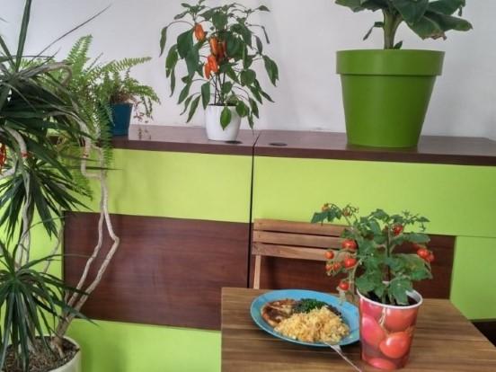 Smaki Roslinne - Plant based meal in Krakow
