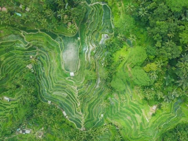 Tegalalang rice terrace in Bali