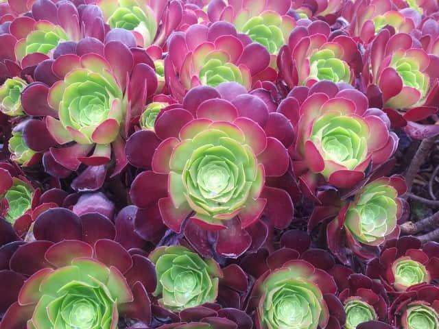 The Desert Garden - Succulents