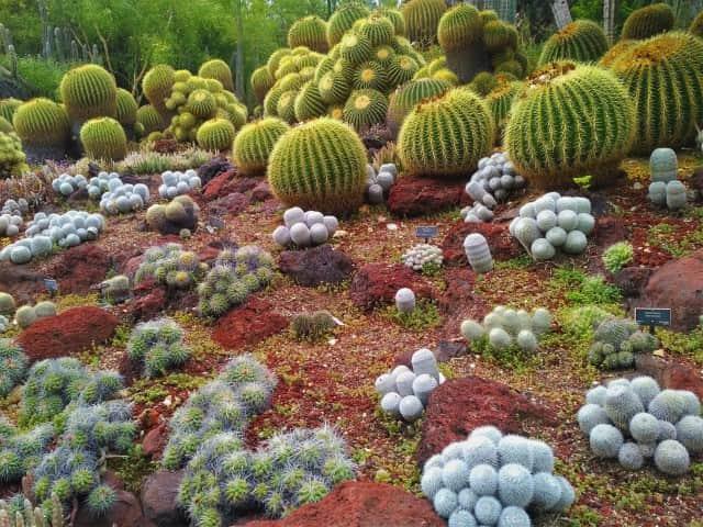 The Desert Garden at Huntington Gardens